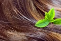 Hair care concept: beautiful healthy shiny hair with highlighted golden streaks and green leaves, closeup shot